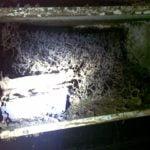 Signs of a termite colony