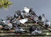 birds-house