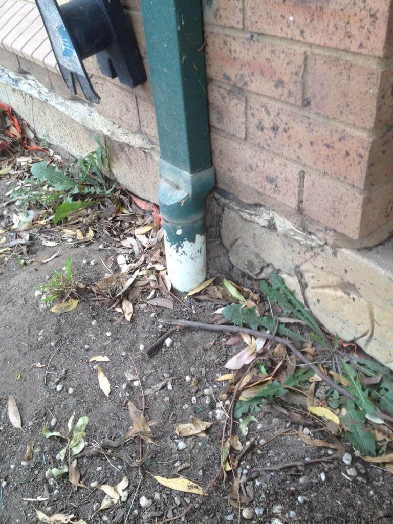Miller's Pest Control - Termite Inspection Coptotermes SPP Lead Behind Downpipe Small