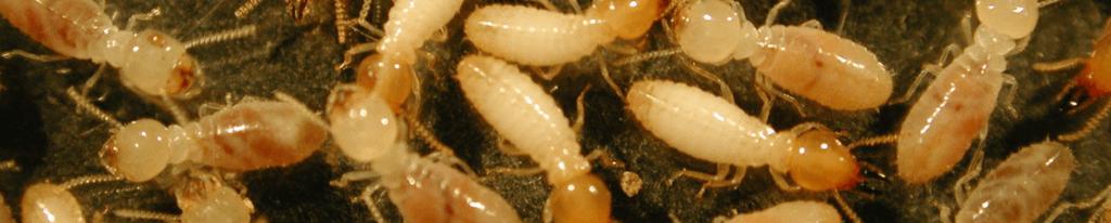 Miller's Pest Control - Termites for Termite Control